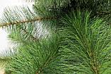 Искусственная сосна Микс 1,3 м  (СШ-М-1,30), фото 2