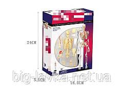 Объемная анатомическая модель 4D Master Skeleton