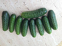 Семена огурца Роял F1 0,5 кг