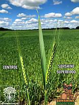 Випробування Stim Agro комлексу мікроелементів на основі амінокислот. польові культури 2020 рік