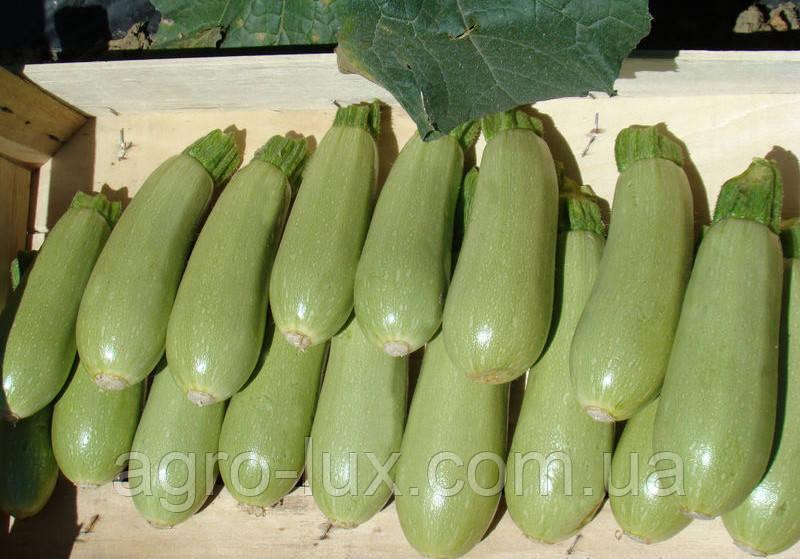 Семена кабачка Асма F1 2500 сем. Clause / Клоз