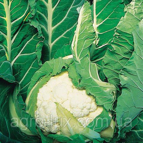 Семена цветной капусты Авизо F1 2500 сем. Clause / Клоз