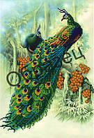 Схема для вышивки бисером «Жар птицы»