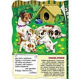 Книжка-картонка Малятко-розумнятко Тварини на подвір`ї Авт: Федієнко В. Вид: Школа, фото 2
