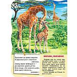 Книжка-картонка Малятко-розумнятко Африканські тварини Авт: Федієнко В. Вид: Школа, фото 2