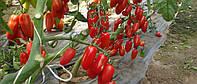 Томат Инкас F1 20 семян