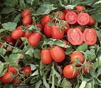 Томат Астерикс F1 20 семян