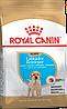 Корм Royal Canin Labrador Retriever Puppy для цуценят Лабрадора, 3 кг 24910301