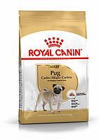 Корм Royal Canin Pug Adult, для собак породы Мопс от 10 месяцев, 1,5кг