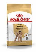Корм Royal Canin Poodle Adult, для собак породи Пудель від 10 місяців, 1,5 кг