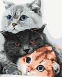 "Картина за номерами Brushme ""Котики - муркотики"" BS34826, фото 3"