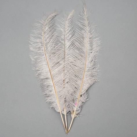 Страусиное перо 55 см светло-серый, фото 2