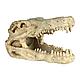 Декорація для акваріума Trixie Черепа тварин 8-11 см, набір 6 шт. (поліефірна), фото 6