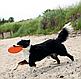 Іграшка для собак Trixie Літаюча тарілка d=18 см (термопластична резина, кольори в асортименті), фото 2