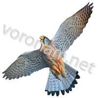 Візуальний відлякувач птахів Хижак-3 / Візуальний відлякувач птахів Хижак-3, фото 1