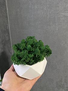 Бетонну Кашпо зі стабілізованим мохом/Стабілізований скандинавський мох в горщику бетонному