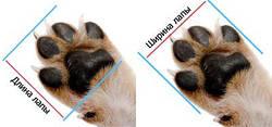 Как правильно определить размеры обуви для собак?