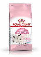 Royal Canin Mother & Babycat 2 кг для котят до 4 мес + КОНТЕЙНЕР в подарок!!!