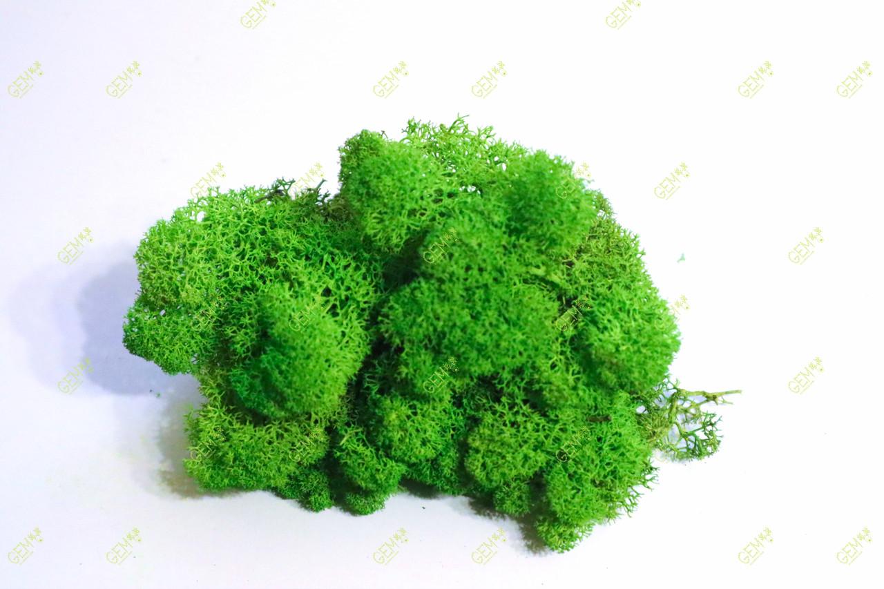 Стабилизированный мох Green Ecco Moss cкандинавский мох ягель Apple Green 4 кг