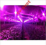 №56 Фито Светодиод 30 ватт 220В Smart IC led 30w 220v полный фитоспектр фито для растений 1.5 мм., фото 7