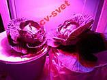 №56 Фито Светодиод 30 ватт 220В Smart IC led 30w 220v полный фитоспектр фито для растений 1.5 мм., фото 9