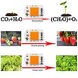 №56 Фито Светодиод 30 ватт 220В Smart IC led 30w 220v полный фитоспектр фито для растений 1.5 мм., фото 4