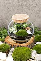 Декоративный флорариум в круглой банке с живыми растениями Ф8