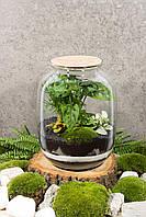 Декоративный флорариум в банке с живыми растениями Ф3
