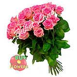 Роза розовая Аква 40 - 90 см., фото 3