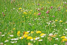 Лечебные травы, фиточай