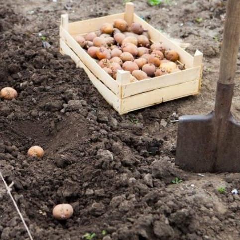 Удобрение для посадки картофеля 1 кг
