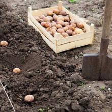 Добриво для посадки картоплі 1 кг