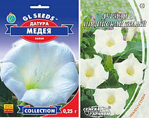 Семена Датура  Дурман Индийский Белый  2 вида