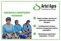 Услуги по переработке чеснока, калибровке головки и посадочного зубка однозубки от 3 тонн