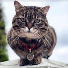 Для кошек, котов