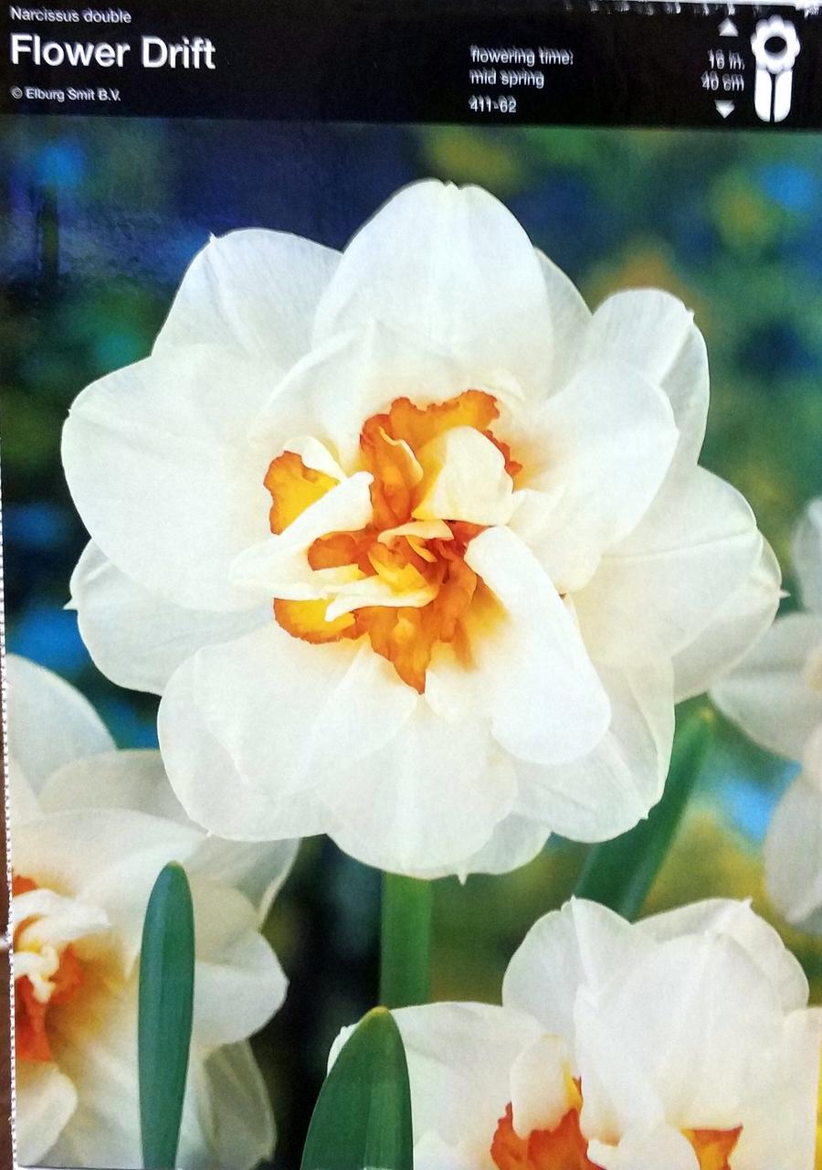 Нарцис Flower Drift 1шт