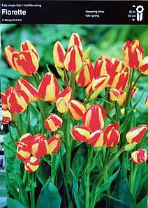 Тюльпан Florette 1шт