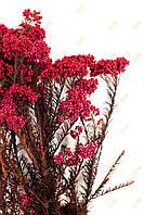 Діосмін (безсмертник)рожевий