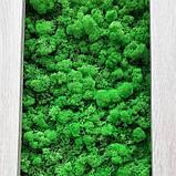 Фітомодулі з стабілізованого моху, фото 2