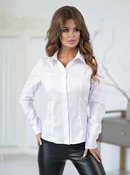 Женские кофты, туники, блузки, футболки, топы.