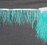 Пір'яна тасьма з пір'я Страуса Колір М'ятно блакитний Перо 9-15с Ціна за 0,5 м, фото 3