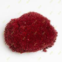 Стабілізований мох Green Ecco Moss купина червона 1 кг