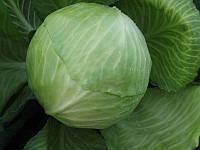 Семена капусты Декурион F1 10 000 сем. Clause / Клоз, фото 1