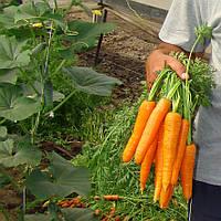 Семена моркови Сатурно F1 100 000 сем.