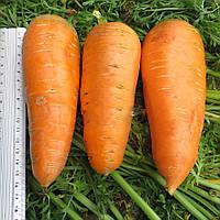 Семена моркови Болтекс F1 0,5 кг Clause / Клоз