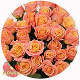 Роза розовая Мисс Пигги 40 - 110 см, фото 8