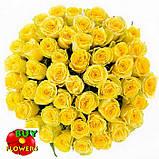 Роза желтая Пени Лейн 40 - 100 см, фото 2
