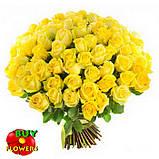 Роза желтая Пени Лейн 40 - 100 см, фото 5