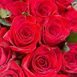 Роза красная Ред Игл 40 - 100 см, фото 4