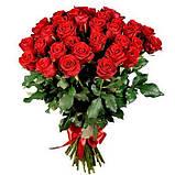 Роза красная Ред Игл 40 - 100 см, фото 2